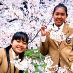 nihongo2007-2